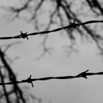 Barbwire-image-by-Danielle-Powell-600
